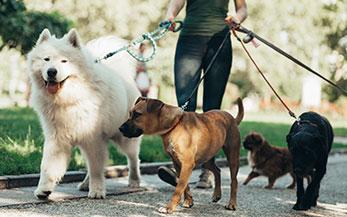 Garde d'animaux : trouver un pet-sitter